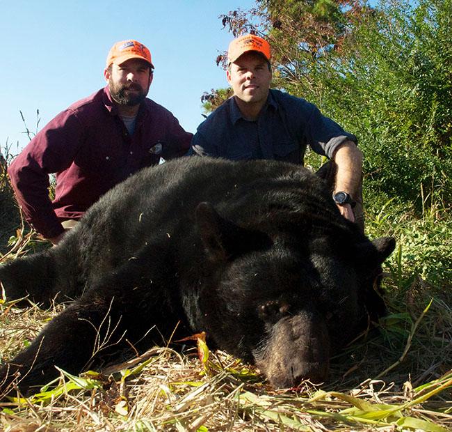 World's Largest Black Bears