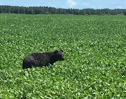 Bear Natural Habitat at LUX